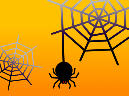 Spider spider web wallpaper
