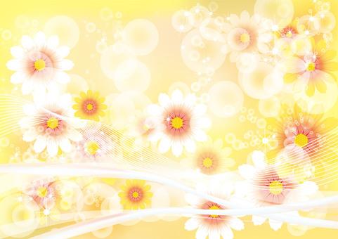 花卉菊花1