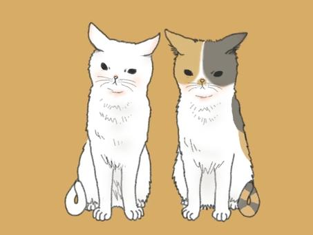 오징어 귀 고양이