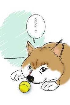 Shiba-chan
