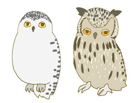 Snowy Owl and Earthworm