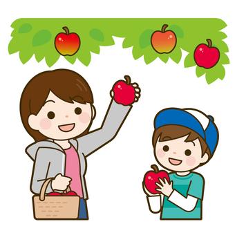 사과 따기