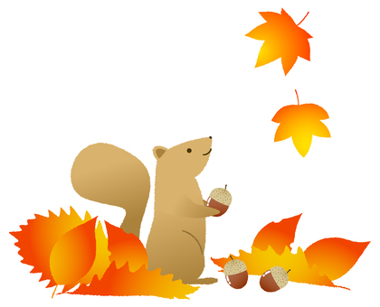 Picking up acorns in fallen leaves