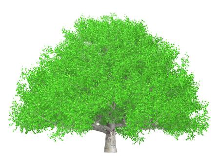 큰 나무 _003