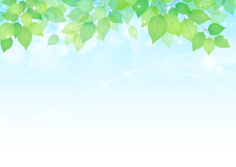 Fresh green material 204
