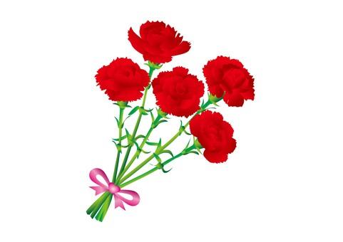 Carnation R4