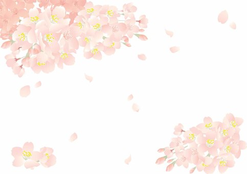 Cherry blossoms background 01