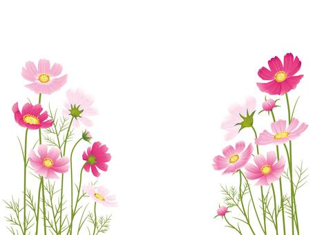 가을의 꽃 코스모스 자르기 05