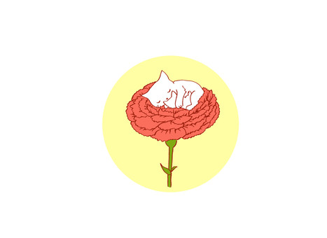 Carnation and cat 2