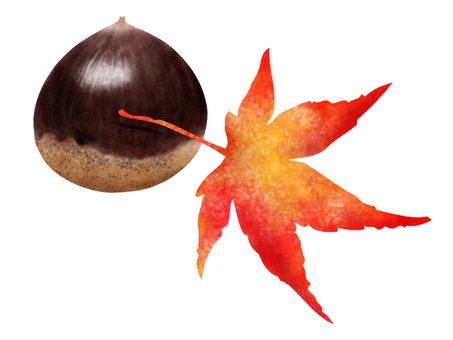 Chestnut and autumn leaves watercolor illustration