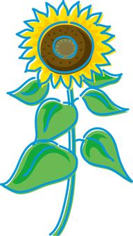 夏天圖像向日葵
