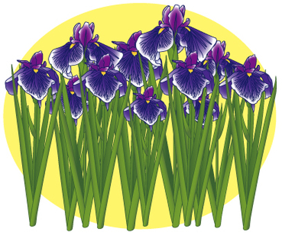 Flower - iris (shoumu) -05