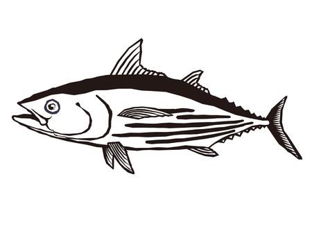 Skipjack illustration _ 003