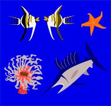 海の生物達