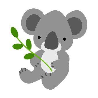 Koala with eucalyptus