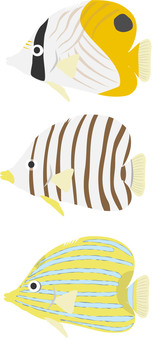 Several butterflyfish