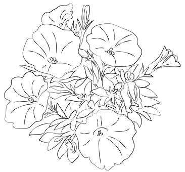Petunia (Coloring)