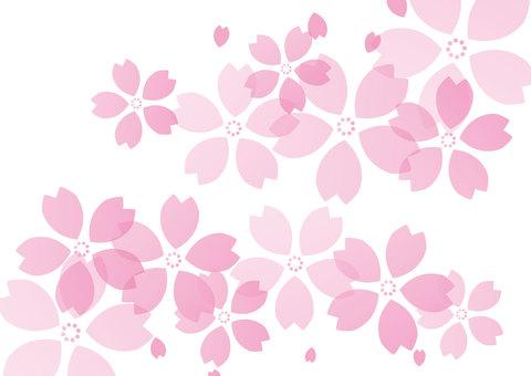 벚꽃 배경 01