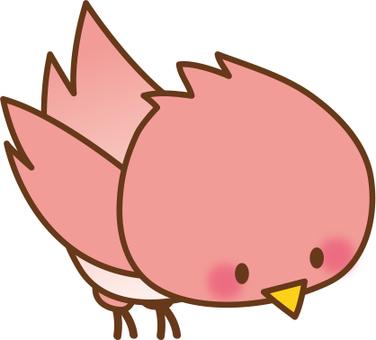 Birds_ Red