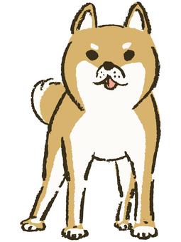 Shiba Inu (whole body)