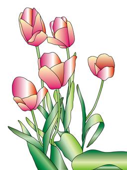 Tulip red 5