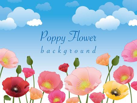 poppy bg01
