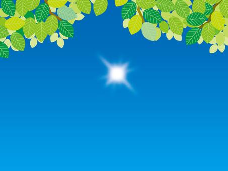 The sun and the four seasons (5) Summer fresh green