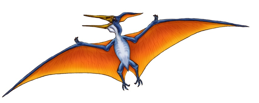 Pteranodon插圖