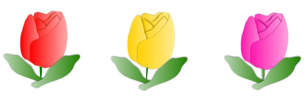 Illustration of tulips