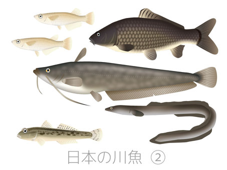 Japanese river fish 2