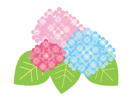 Rainy season and hydrangeas