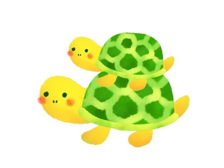 Turtle parent and child