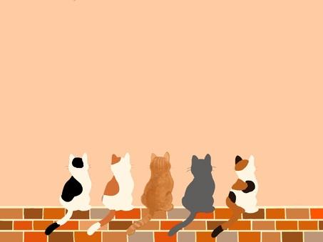고양이와 벽돌 프레임 시리즈