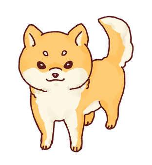 Shiba Inu (brown)
