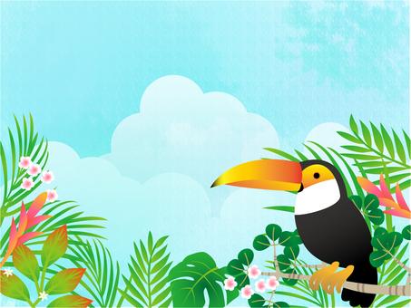 密集的森林,巨嘴鸟和蓝天