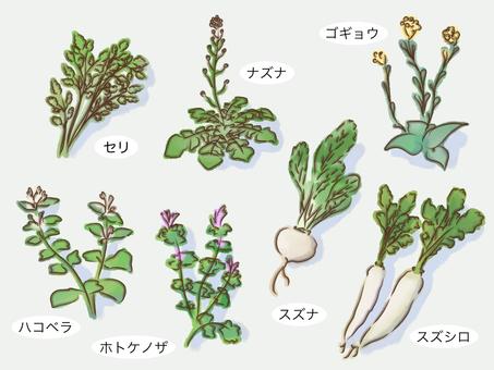 春の七草 素材 シンプル イメージ