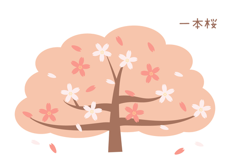꽃놀이 · 하나로 벚꽃