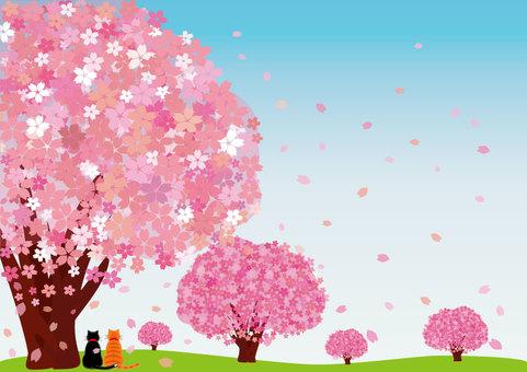 Sakura (postcard / cat: blue sky)