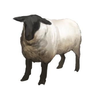 Sheep suffolk