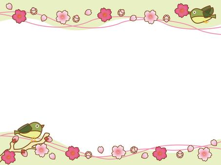 Cherry blossoms and mezzo frame
