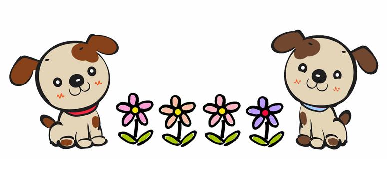 완코와 꽃