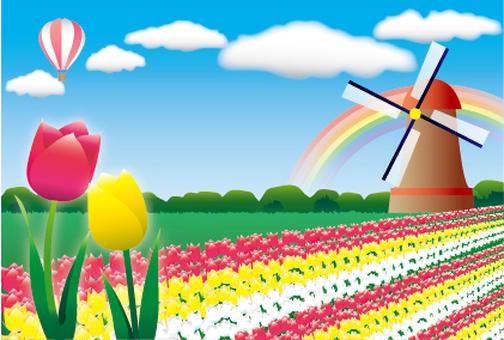 Tulip field Frame background