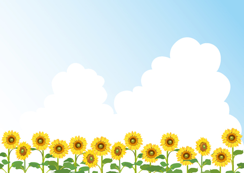 Background of sunflowers and incoming clouds