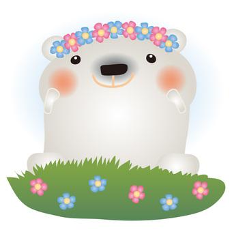 White bean flower field