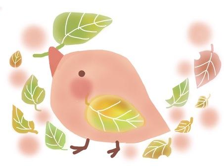 在秋天的樹林裡的鳥