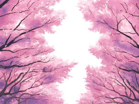 벚꽃길 (흰색 배경)
