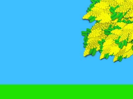 Mimosa bulletin board (2393)
