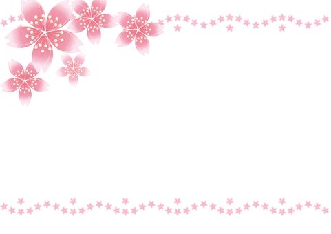 Sakura cherry line 21