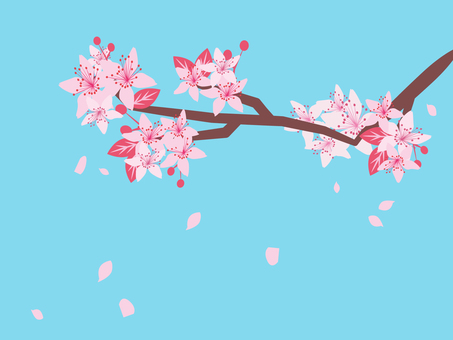Cherry tree with blue sky