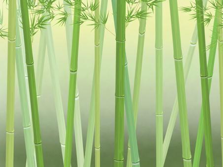 Bamboo grove_side_dark background
